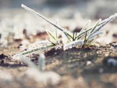 blackview, трава, iphone