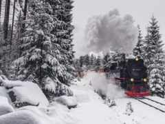 поезд, лес, winter