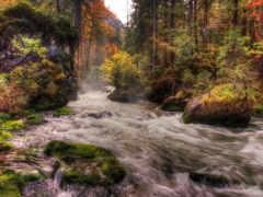 река, лес Фон № 32036 разрешение 1920x1080
