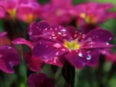 cvety, скинали, роса