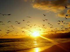 рассвет, птицы, закат