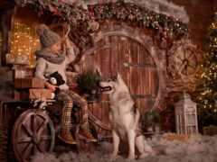 год, собака, christmas