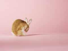 кролик, розовый, animal