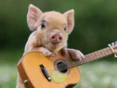 гитара, oir, porosenka