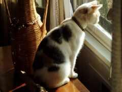 кот, смотреть, окно