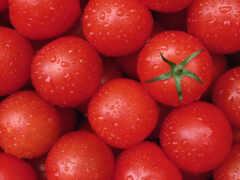 tomato, meal, растительный