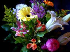 цветы, красивый, you
