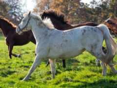 лошадь, трава, три