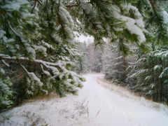 снег, зимний лес