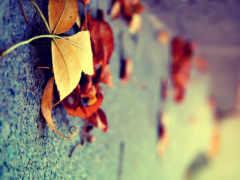 осень, листва, желтые