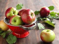осень, яблок, сорт