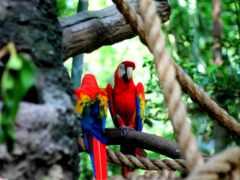 animal, попугай, природа