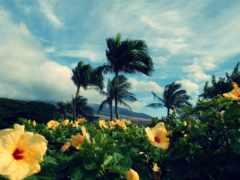 природа, красивая, тропиках