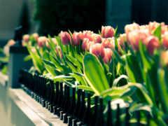 spring, gathering
