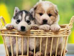 parede, cachorros, papel