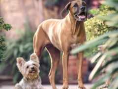 собака, устройство, perro
