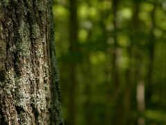 ствол, дерево, лес