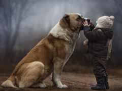 собака, ребенок, small