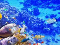 рыбки, подводный, коралловый риф