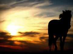 закат, foto, лошадь