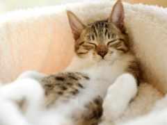 кот, спит, коты