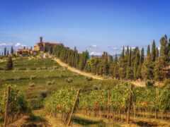 vineyard, castello, вино