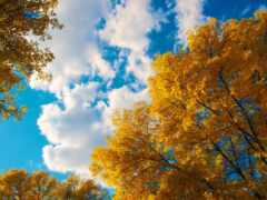 дерево, небо, осень