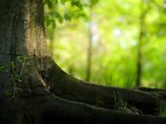 дерево, природа, root