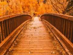мост, осень, fore