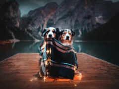 собака, гора, garland