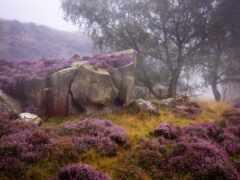 rock, камень, heather