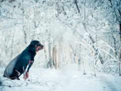 зимой, собака, лайков