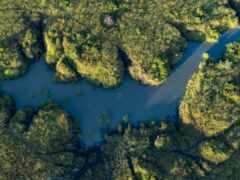 река, tidal, нота