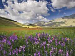 цветы, заставка, поле