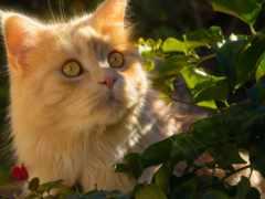 кошки, tapety, кот