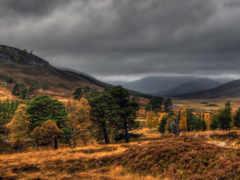 природа, лес Фон № 8910 разрешение 1920x1080