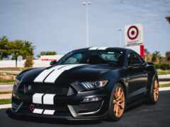 shelby, mustang