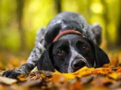 pes, suche, lístie