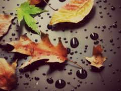 листва, осенние, листочки