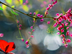 природа, images, profile