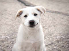собаки, собака, улыбака