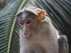 ipad, обезьяна, мини