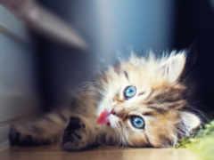 кошки, котята, zhivotnye
