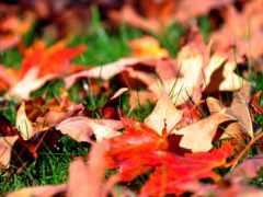 листва, трава, осень