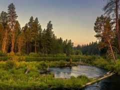 река, лес, природа