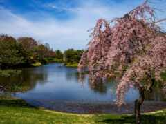 landscape, natural, garden