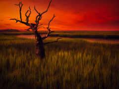 дерево, landscape