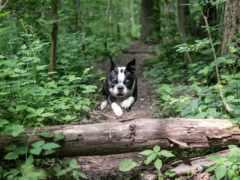 собака, бежать, прыжок