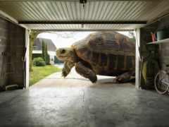черепаха, большая, черепахи Фон № 126927 разрешение 1920x1200