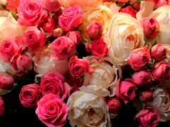 роза, праздник, букет